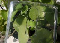 Pouzdro Goospery Mercury Jelly na LG V10 - čiré